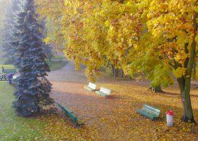 Alejka parku z ławkami w jesienny słoneczny dzień