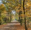 Jesienna aleja w Parku